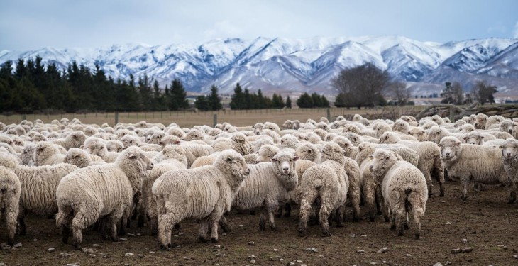 EU's largest sheepmeat supplier sees lamb numbers drop in February