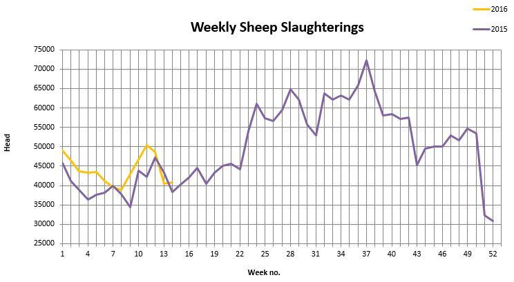 sheep kill 1442016