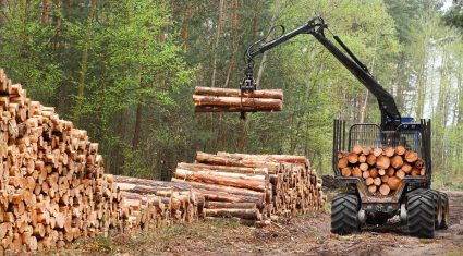€26m in annual tax-free payments begin to issue to forest owners