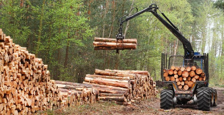 Farmers can earn up to €257/ac each year through forestry
