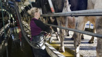 Irish milk production forecast to slow for the rest of the year