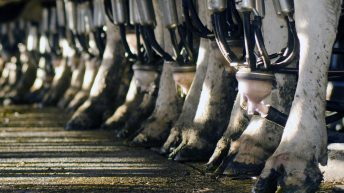 'Ornua PPI rise justifies further milk price increases'