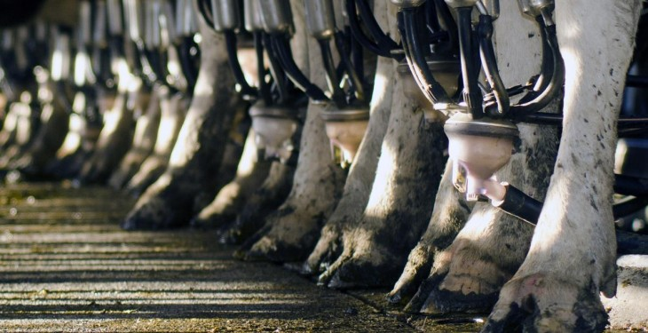 Aurivo increases its February milk price to 32.5c/L