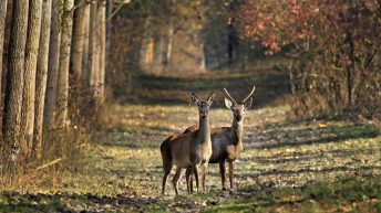 Tip off leads to discovery of mass deer grave in Wicklow