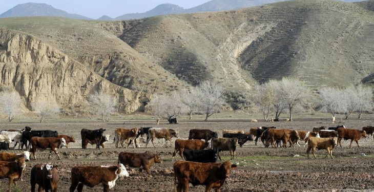 Australia's largest farm with 160,000 cattle to be sold for €256m