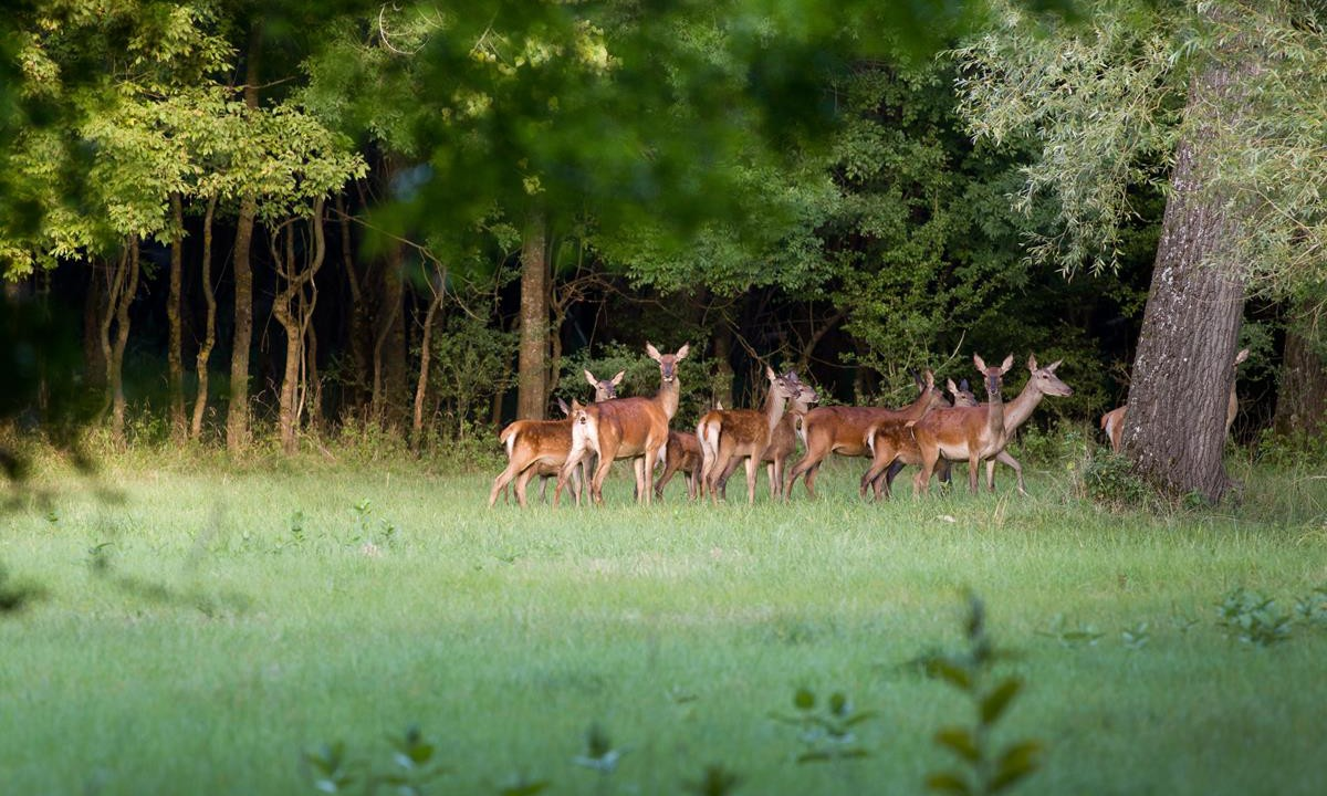 Deer carcass and firearms seized after vehicle is stopped