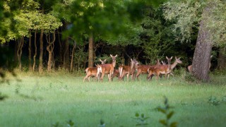 'Farmers should be allowed to shoot deer out of season'
