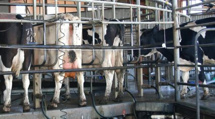 US milk production continues on its upwards trend in 2017