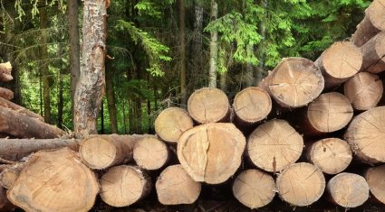 Over 7,000ha of forestry to be planted under Afforestation Programme this year
