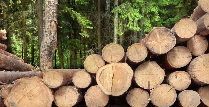 Could this new tool help maximise returns for forest owners?