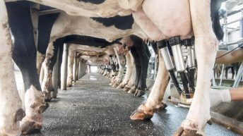 Farmers will need to weigh up options with new Milk Supply Reduction Scheme – IFA