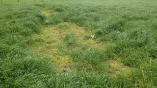 'Chickweed can completely smother out grass if not controlled in time'