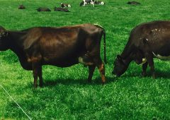 Farmers turn to a different feed armoury as grass growth dips