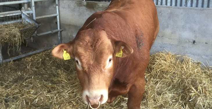 Beef cattle supplies remain tight with little change in prime throughput