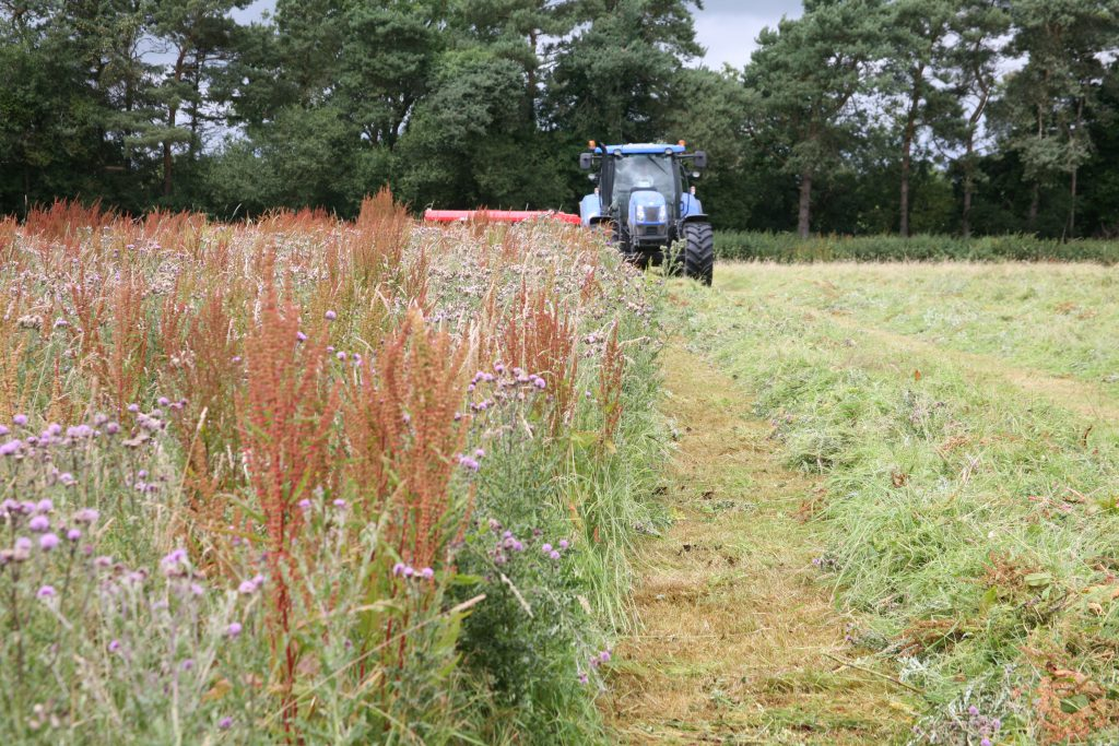 Weeds can dramatically reduce grass yields and play havoc in baled silage by puncturing the film warping.