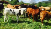 Exports to 'the home of the €1,000 weanling' drop to a 5-year low