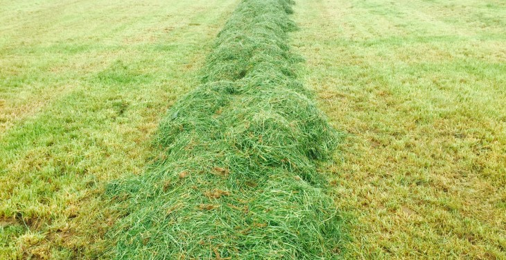 Grass advice: Don't delay in taking out surplus paddocks for bales