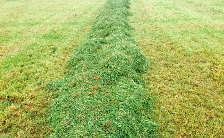 Grass growth moving into surplus territory