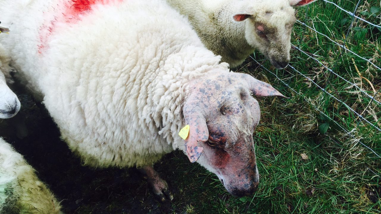 Woman 'shaken' after ram attack in Mayo