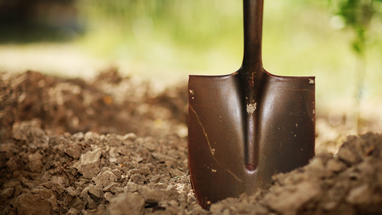Horticulture gets over €5m in funding from new Government