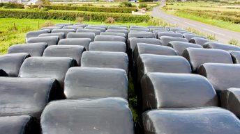 Silage strikes €30/bale in many regions