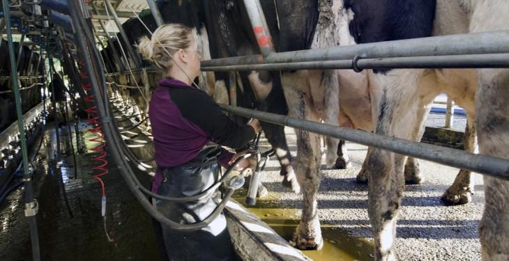 British spring peak milk set to hit 3 year low