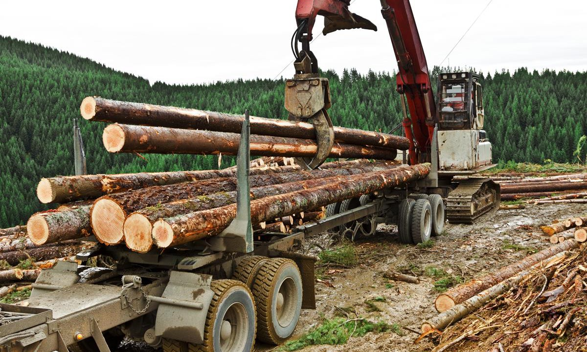 Timber industry 'sourcing trees from Russia' due to objector logjam – Healy-Rae