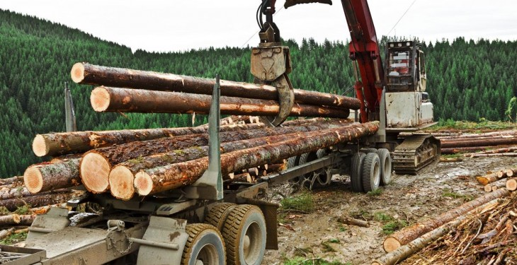 'Irish forestry sector to double in size over the next 10 years'