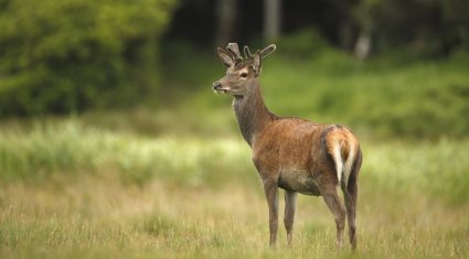 Department to outline planned deer cull to Wicklow farmers