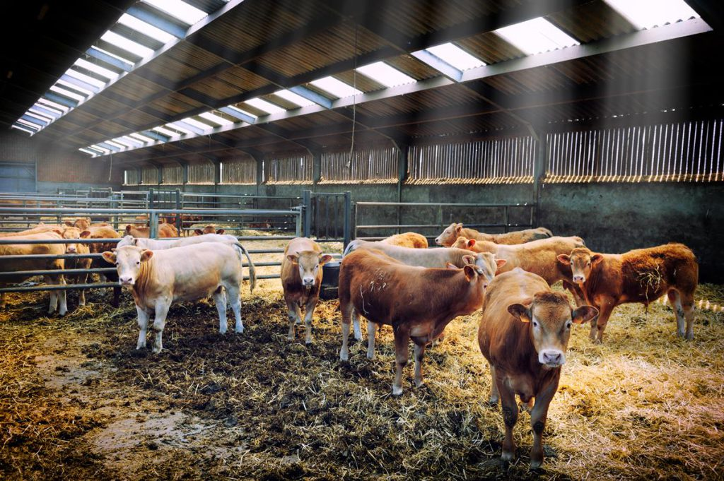 Will Irish Cattle Finishers Breakeven This Winter Agriland