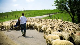 Minister rules out top-up for hill farmers in new sheep scheme