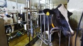 TB-stricken farmers raise questions over department efficiency in tackling TB