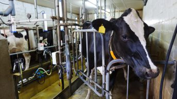 New report shows cost of Liquid Milk production is 40c/L