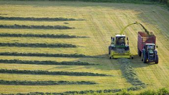 How does silage harvesting date affect crop quality?