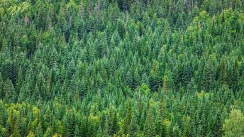 Ireland's forestry sector contributes €2.3 billion to the Irish economy