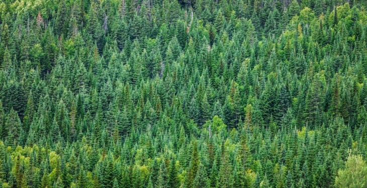 Backing given for €200m investment in the Irish forestry sector