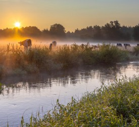 Farmers urged to stay vigilant to prevent water pollution