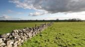 有多少是在头3个月到2020年爱尔兰农田值多少钱?