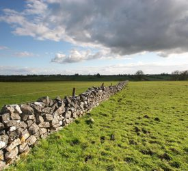 'Farmer confidence remains strong': Land prices set to rise in 2021