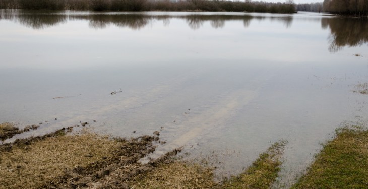 Farmers are selling off cattle as they've no grass to feed them due to flooding