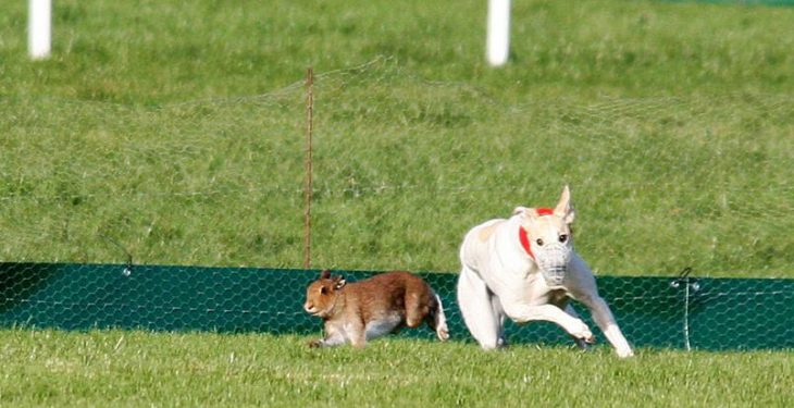 Hare coursing: Licences that were issued 'should be revalidated from today'