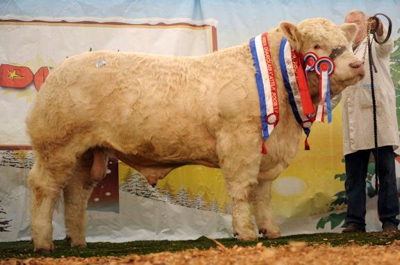 Dereskit Fernando is pictured when he was champion at 2011 Christmas Cracker show and sale.