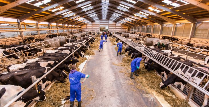 The changing face of US dairy industry – Cow numbers to reach 9.2m by 2024