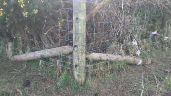 Applying for sheep fencing grant aid? – Here's the specs you need to keep in mind