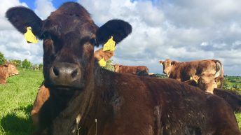 'Road map' for Irish beef sector to be put forward today