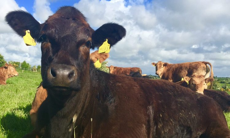 Criticism for Department's latest cattle tag decision