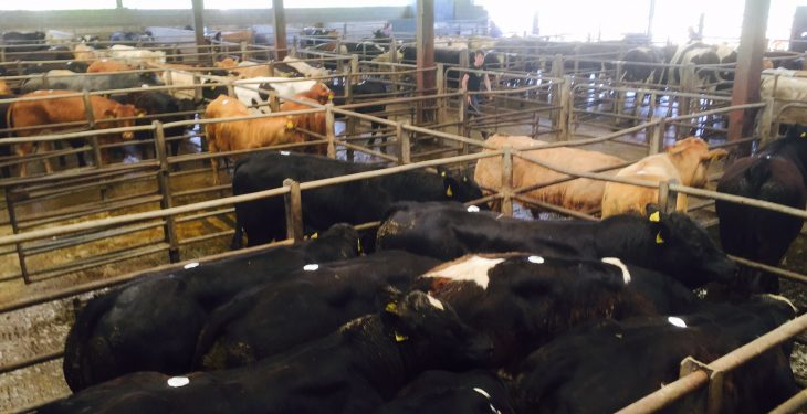 Cattle marts: Rainfall takes its toll on the ringside trade