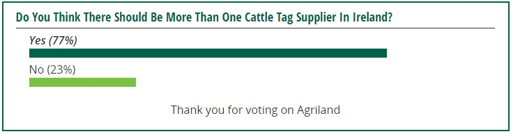 cattle tags poll 2