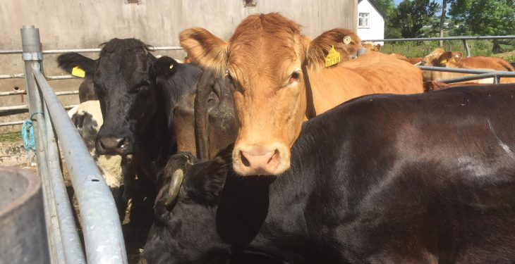 'Cattle farmers in dire straits with TB outbreaks'
