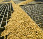 欧盟玉米价格——天空可能是极限